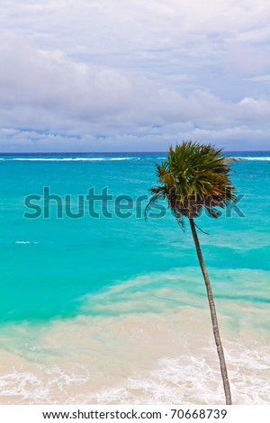 Beach in Mexico with a palm tree