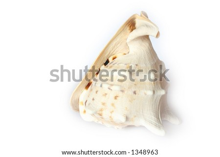 Beach Object  Conch