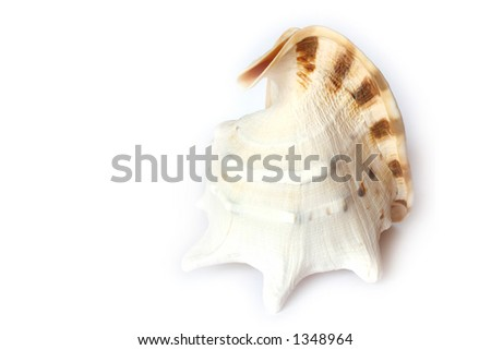 Beach Object Conch