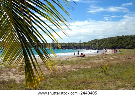 beach on vieques, Puerto Rico