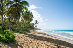Beach - Palm Trees - Around Puerto Plata - Dominican Republic