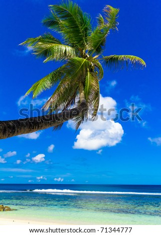 palm wallpaper. stock photo : Beach Palm Wallpaper