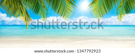 Beach panorama with palm tree as background image #1347792923