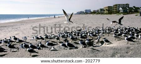 paradisebirds