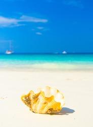 Beach Pearl Seascape Divine