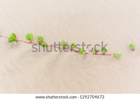 Beach sand dunes with scrub plant close-up growth detail scenic nature reserve vegetation landscape. #1292704672