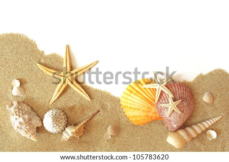 beach sand, shells and seastar border on white