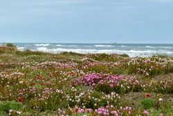 Beach scape, wild flower meadow with the sea on the background. Tranquil scenery, outdoor living.
