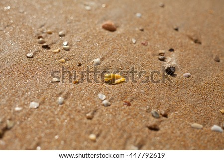 beach shell sand #447792619