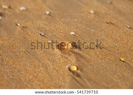 beach shell sand #541739710