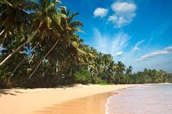 Beach. Sri Lanka