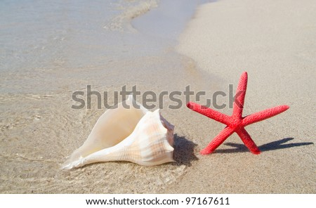 beach starfish and seashell in white sand tropical shore