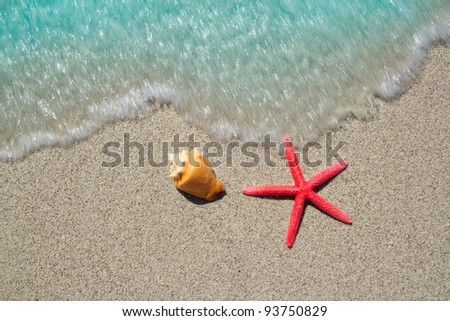 beach starfish and seashell with wave coming to shore