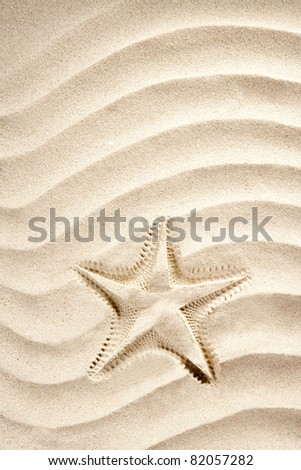 beach starfish printed over white caribbean white sand