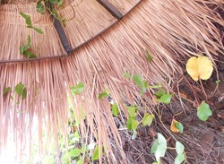 Beach umbrella made of palm leaves and wood, bottom view.