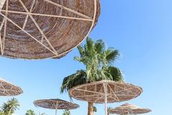 beach umbrellas and palm trees against the sky