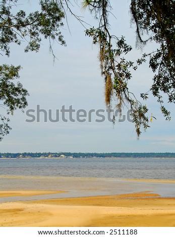 Beach Under Spanish Moss