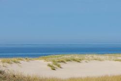 Beach view from the sand dunes (dyke) at Dutch north sea coast with european marram grass (beach grass) under blue clear sky in summer, North Holland, Netherlands.