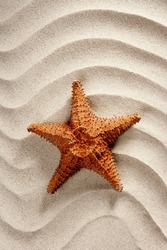 beach white wavy sand with starfish such a summer vacation symbol