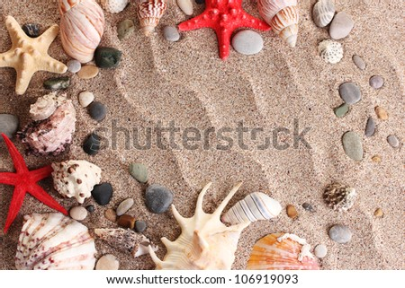 Beach with a lot of seashells and starfishes