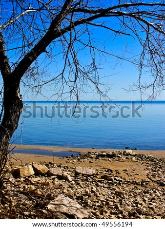 Beach with beautiful blue skies and water, single bare tree frames the scene.