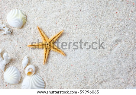 Beach with many seashells and starfish.