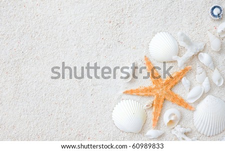 Beach with many seashells and starfish.
