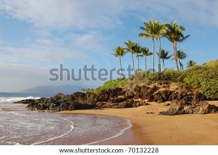 Beach with palm trees in Maui, Hawaii