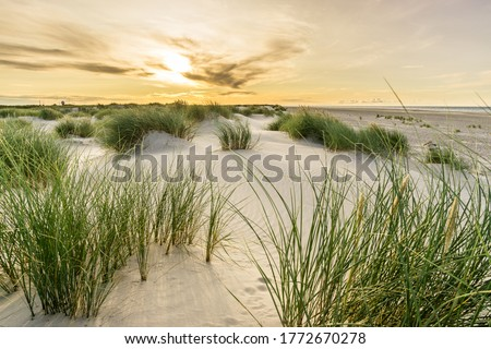 Photo of  Beach with sand dunes and marram grass with soft sunrise sunset back light. Skagen Nordstrand, Denmark. Skagerrak, Kattegat.