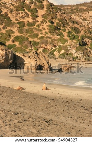 Beach with seals