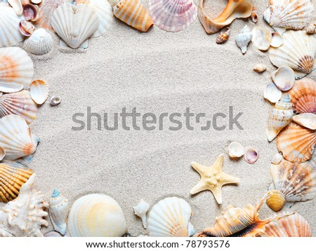 beach with starfish and seashells