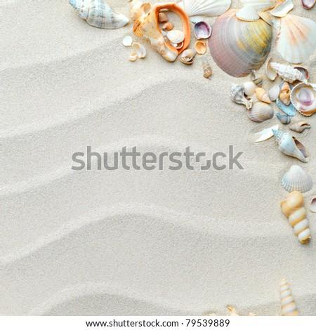 beach with starfish and seashells