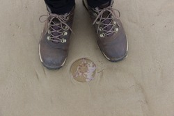 Beached jellyfish. Transparent jellyfish at the Baltic sea beach.