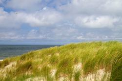 Beachgrass in the beach sand dunes, Dunes of Texel National Park landscape, Frisian Islands