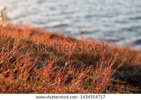 """Beachline and some flora in Balticsea archiepelago in Finland. Photo taken at midnight """"setting"""" sun in midnight. #1434314717"""