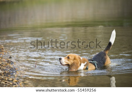 Beagle on Vacation