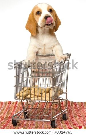 Beagle puppy pushing shopping cart filled with dog food