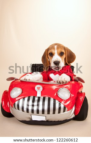 Beagle puppy wearing red jacket in soft red toy car on beige background