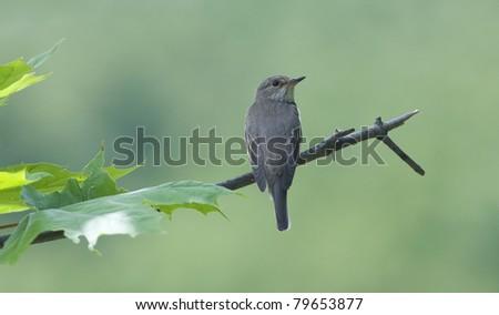 beambird