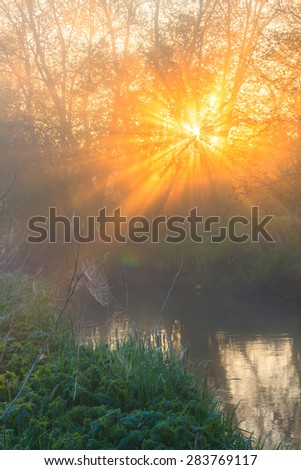 Beams of the sun make the way through fog and branches of trees and light a web and a grass. Sun beams at sunrise at the river with fog
