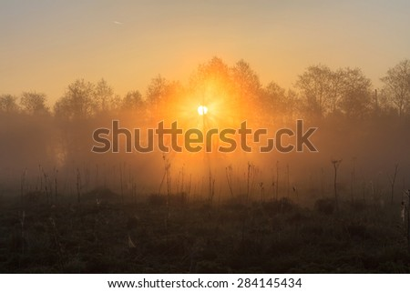Beams of the sun make the way through fog and branches of trees and light a web and a grass. Sun beams at sunrise at the river with fog. Beams of the sun light a field