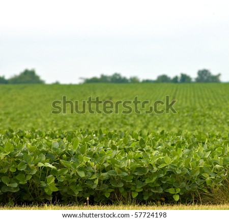 Bean field with shallow depth of field