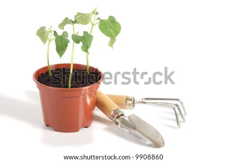 Bean seedlings in flower pot and gardening tools, isolated on white background