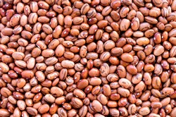 Beans of bean ( beans ).  Background of many grains of dried beans. Brown beans texture. Food background. Close up. Bean background and textured. Background of brown bean. Brazilian diet snack food.