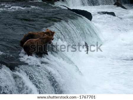 Bear and Cub fishing, Katmai National Park, Alaska