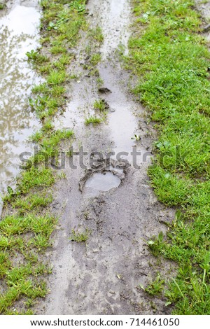 bear footprint on a path after...