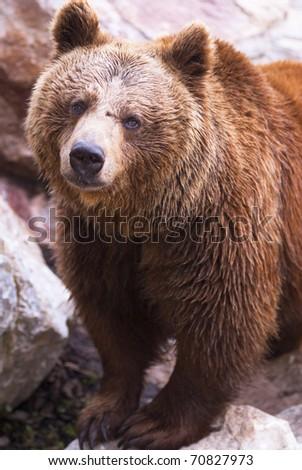 Bear interested