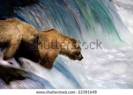 Bear Mother and Cub Fishing