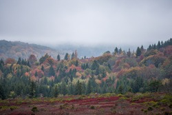 Bear rocks trail with view of fall autumn forest mountain ridge landscape in Dolly Sods, West Virginia with red colorful foliage and trees with cloudy rain weather