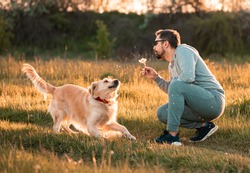 Bearded man playing with big golden retriever dog on sunset. Guy blowing dandelion to his dog for fun. Dog expresses emotions to his owner on fresh air outside.